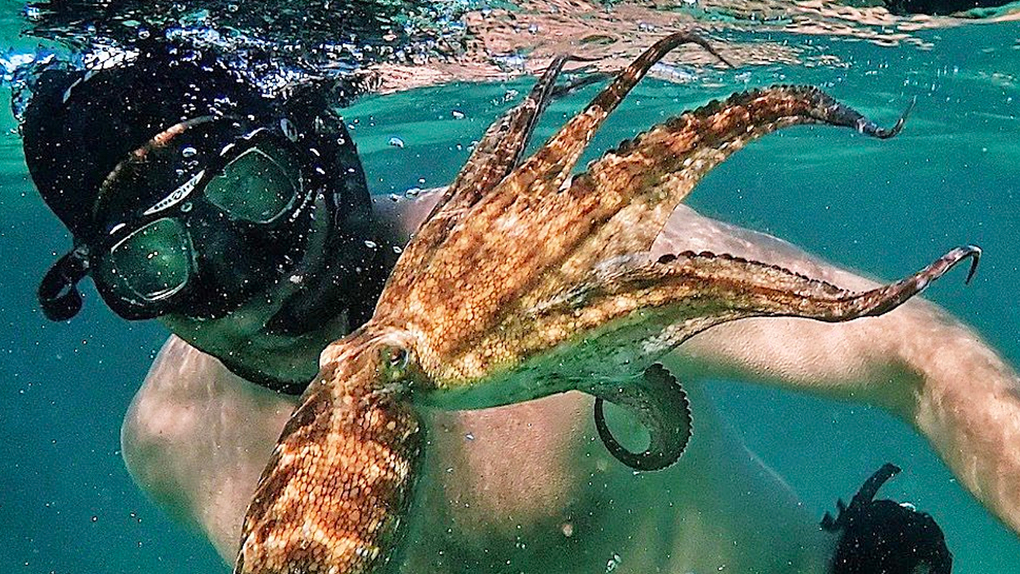 Moje učitelka chobotnice (2020) | Trailery | MovieZone.cz